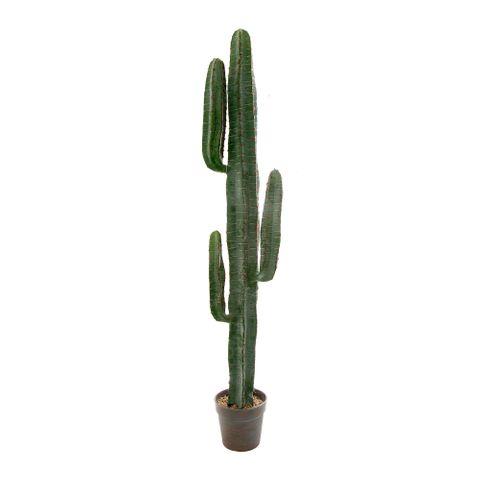 Desert Cactus 1.56m