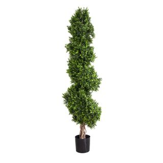 Boxwood Spiral Tree 1.9m