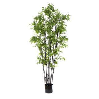 Japanese Bamboo Black Stem 1.9m