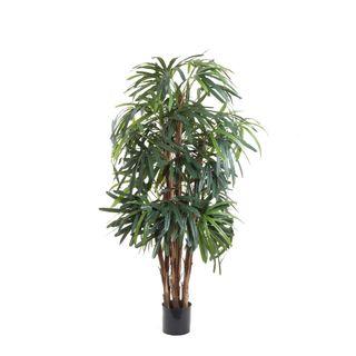Raphis Palm Thin Leaf 1.2m