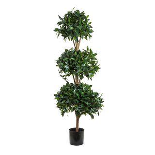 Sweet Bay Triple Ball Tree 1.7m