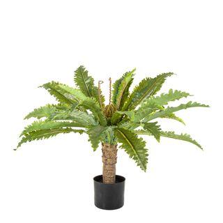 Fern Palm in Black Pot 62cm