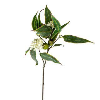 Eucalyptus Flower Spray 70cm