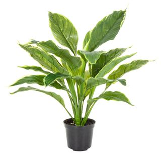 Hosta Plant real touch in Pot 42cm Green