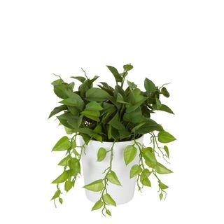 Leaves in White Plastic Pot 35cm