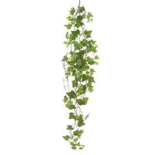 Ivy Leaf Bush 1.1m
