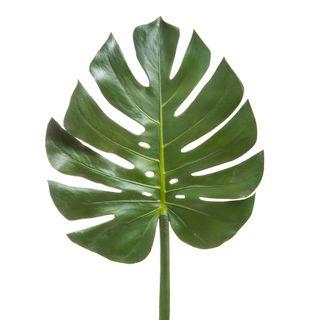 Split-Leaf Philodendron Monstera 94cm