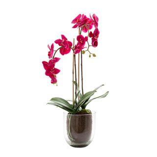 Orchid in Glass Vase 80cm Fuchsia