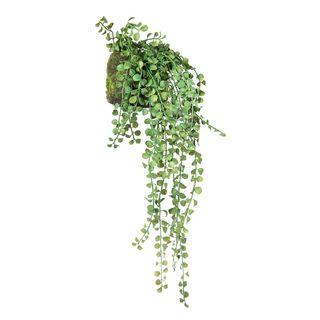 Succulent Hanging 64cm