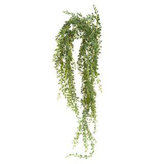 Senecio Succulent Hanging 90cm