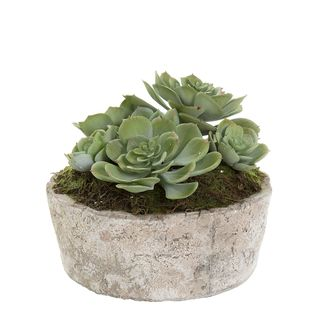 Succulent in Ceramic Pot 16cm Green