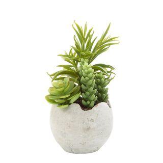 Succulent Mixed in Pot 18cm