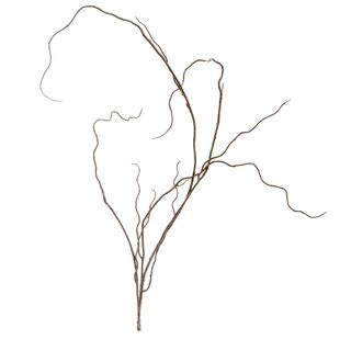 Curly Twig 97cm Brown