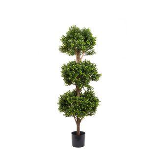 Boxwood Triple Ball Tree 1.2m
