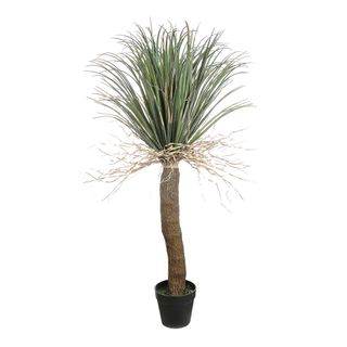 Grass Tree Large 2m
