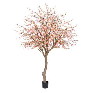 Giant Cherry Blossom Tree 2.4m
