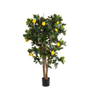 Lemon Tree 1.15m