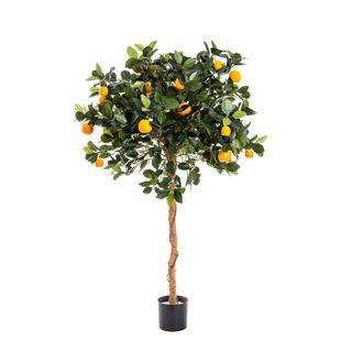 Golden Orange Tree 1.2m