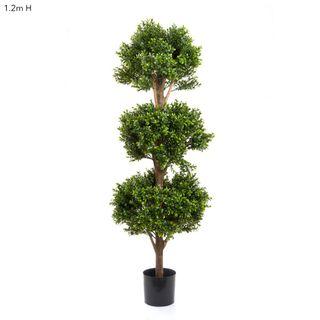 Boxwood Triple Ball Tree 1.2m 2412 Lvs