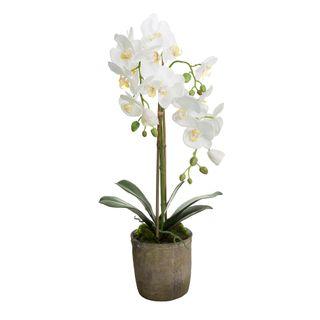 Orchid in Terracotta Pot 65cm White