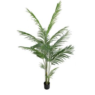 Areca Palm Potted 1.83m