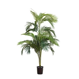 Areca Palm Potted - 1.2m