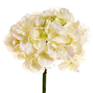 Hydrangea 50cm White