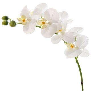 Orchid Phalaenopsis Real Touch 75cm White