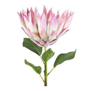 Protea Spray Open with Leaves 70cm Pink