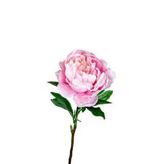 Peony Queen 70cm Pink