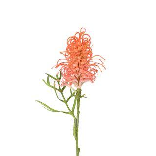 Protea Wild Stem with Leaf 63cm Orange