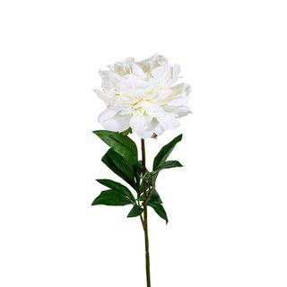 Peony Regal 70cm White