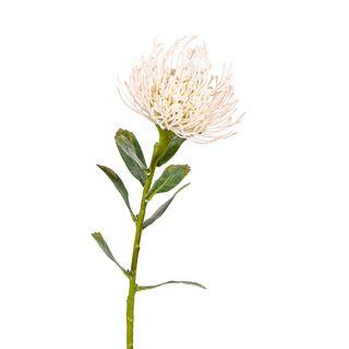 Protea Stem 61cm Cream