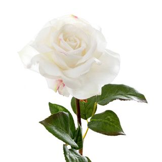 Rose True Touch 50cm White