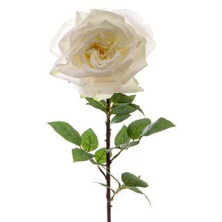 Cabbage Rose Large 85cm White