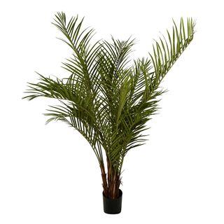 Palm Tree 2m