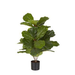 Fiddle Leaf Fig Potted Plant 65cm