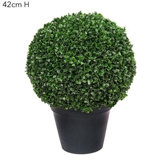 Boxwood Ball Potted 42cm Green