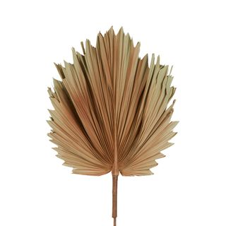 Preserved Palm Leaf Brown Small