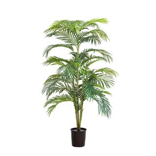 Areca Palm Potted 1.5m