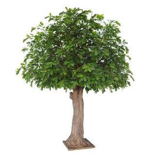 Oak Tree 7656Lvs 486 Fruits 3.1M