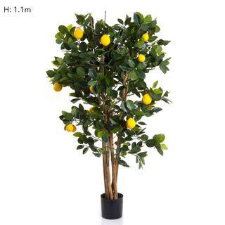 Lemon Tree 91cm 1026Lvs