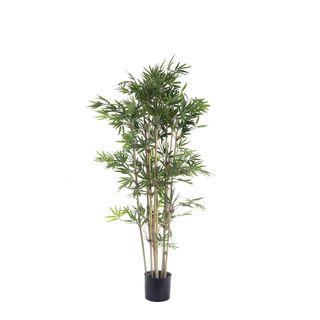 Japanese Bamboo Tree x9 1.2m 1440Lvs