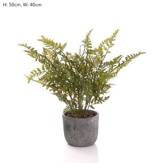 Fern in Pot 48cm
