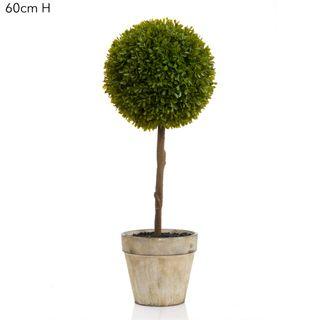Boxwood Topiary 60cm Green