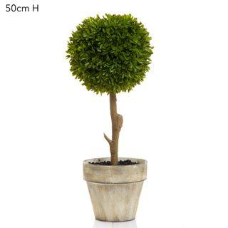 Boxwood Topiary 47cm