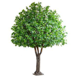 5.7M Maple Giant Tree W/7245 Lvs