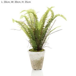 Fern Lge in Pot 35cm