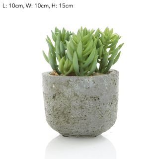 Succulent in Pot 15cm
