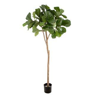 1.8m Fiddle Leaf Fig Tree w 96 Leaves